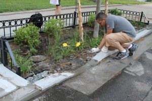 """Bioswales are """"used to describe planted areas that collect storm water""""."""