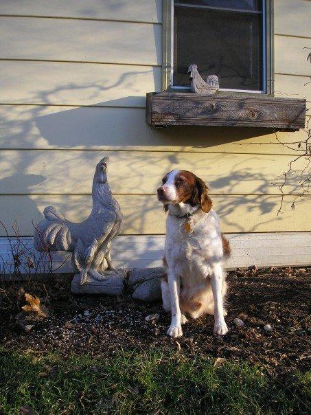Tuck is 15 now. <i>Photo by Christine Marie Kilmer</i>