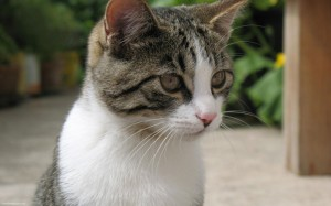 If you are interested in adopting, one can adopt a cat from the Bronx Cat Coalition.