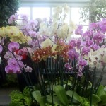 It was also the last day of The Orchid Show.