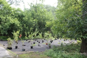 The Bronx River Alliance and MillionTreesNYC (MTNYC) will host a series of planting events.