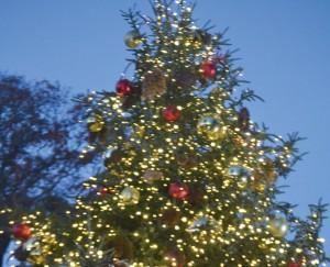 Durante las últimas dos décadas, el Jardín Botánico de Nueva York (NYBG) ha lanzado la temporada de fiestas con su ceremonia de iluminación del árbol, una menorá también está iluminada.