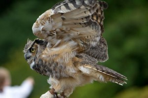 Guests will be granted the opportunity to meet a live owl.