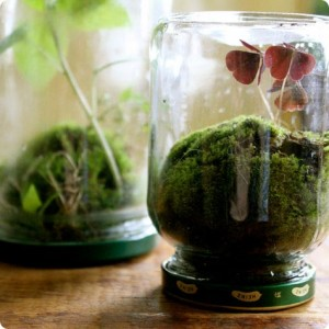 Create your own scene with diminutive plants.