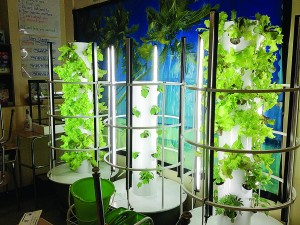 "The Hyde Leadership Charter School on Bryant Avenue uses a unique tower garden system, known as the ""Green Bronx Machine"".  Photo: G. McQueen"