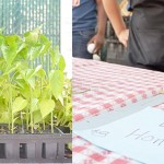 The market is run by City Farms Markets, a network of community-run farmers markets.