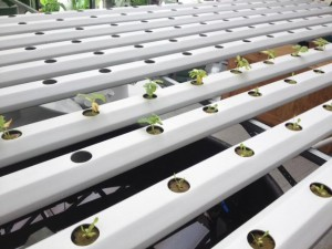 Students use indoor tower gardens and hydroponic tables to create their own crops.