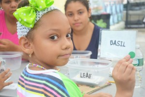 The students learn to categorize plants and herbs.