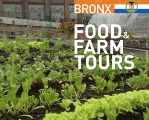 Visit some of the borough's urban farms.