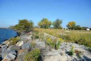 Help restore the park's coastal beauty.