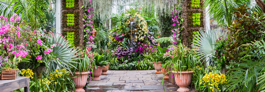 Learn about orchids throughout history.