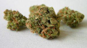 : Aprenda más sobre el cannabis.
