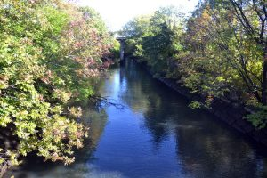 A view of Bronx River from Starlight Park.