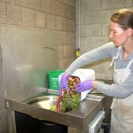 """Compost is what plants need,"" said IIona Linins, Director of Environmental Health and Safety."
