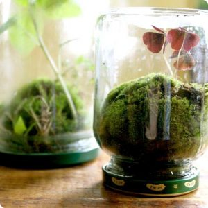 Make your own tiny ecosystem.