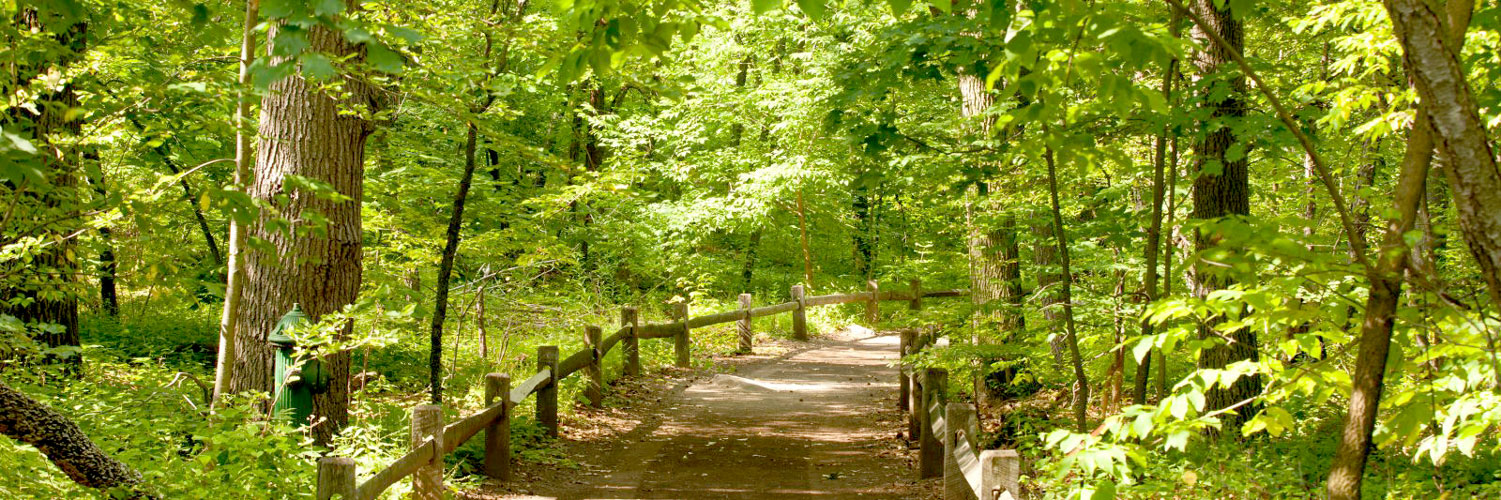 a visit to a forest Forest park forever is the private nonprofit conservancy that partners with the city of st louis to restore, maintain and sustain forest park each year, our donors provide more than half the annual funds necessary to care for forest park.