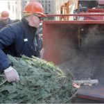 DSNY reports that is has collected more than 242,000 trees since 2016.