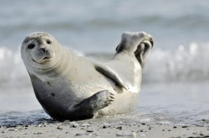 Check out some seals.