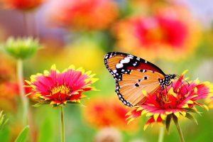 Protect pollinators.